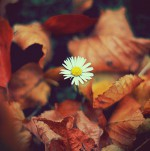 autumn-flower-leaves-photography-pretty-favim.com-103661.jpg